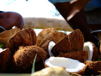 PNG-Image-coconuts-thb.jpg - 10965 Bytes